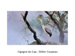 03 DC cigogne
