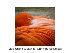 05 CJ flamant rose