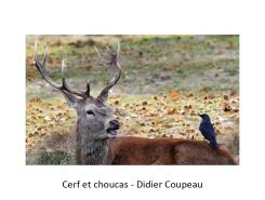 06 DC cerf