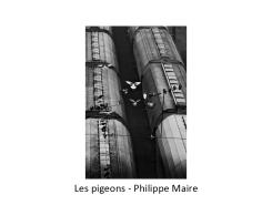 24 PHM pigeons