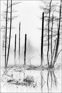 1-arbre-brume-1