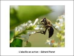 abeille_GP