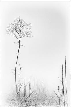 arbre-brume-10