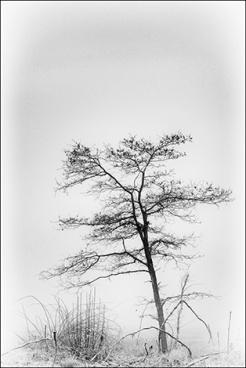 arbre-brume- 6