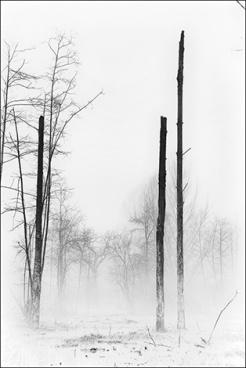arbre-brume-8