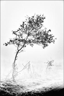 arbre- brume