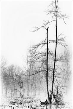 arbre-brume2