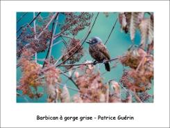 barbican_PG