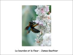bourdon_fleur_JG