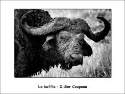 buffle_DC