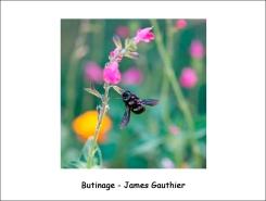 butinage_JG