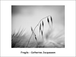 fragile_JC