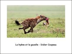 hyène_ et_gazelle_DC