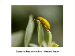 insecte_milieu_GP