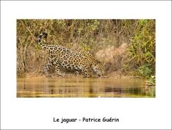 jaguar_PG