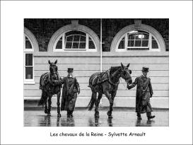 les chevaux de la Reine SA
