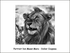 lion_masaimara_DC