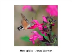 moro_sphinx_JG