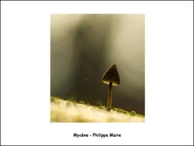mycène_phm