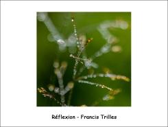 reflexion_FT