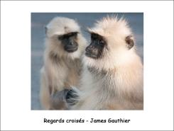 regards_croisés_ JG