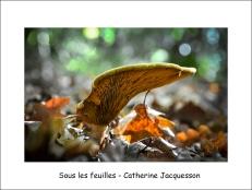 Sous les feuilles cj