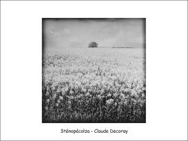 sténopécolza124x126 CD