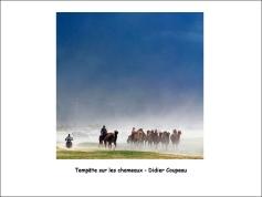 tempête_sur_les chameaux