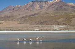 AB Bolivie Lagunas